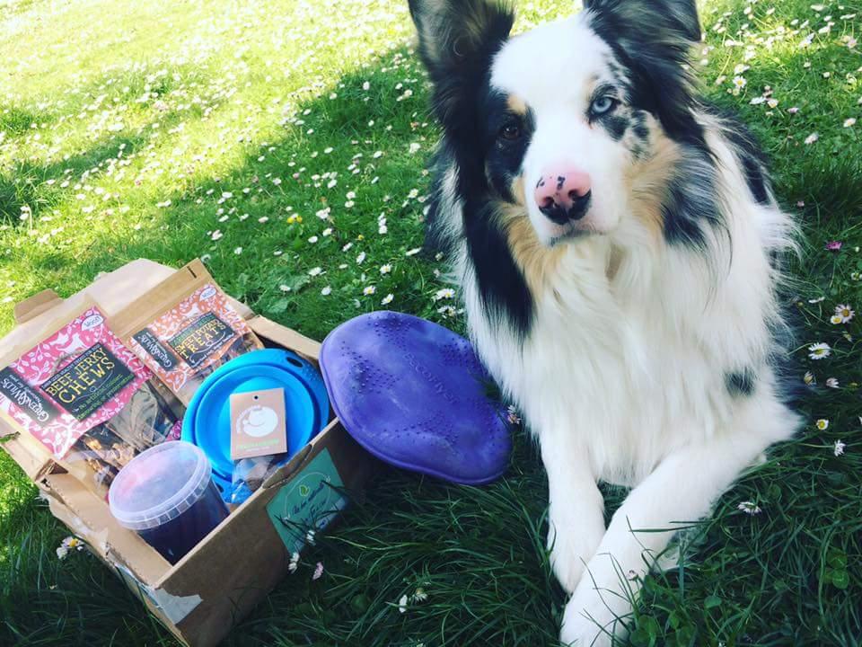 La Box Naturelle de printemps pour chien et chat 2017