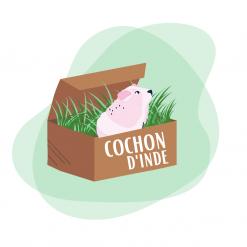 Box pour cochon d'inde