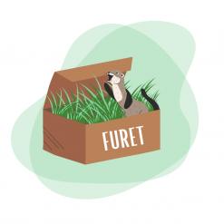 Box pour furet