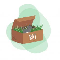 Box pour rat
