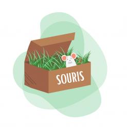 Box pour souris