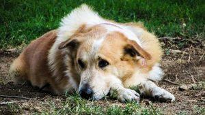 Urgence vétérinaire: les bons réflexes à avoir - La Box Naturelle