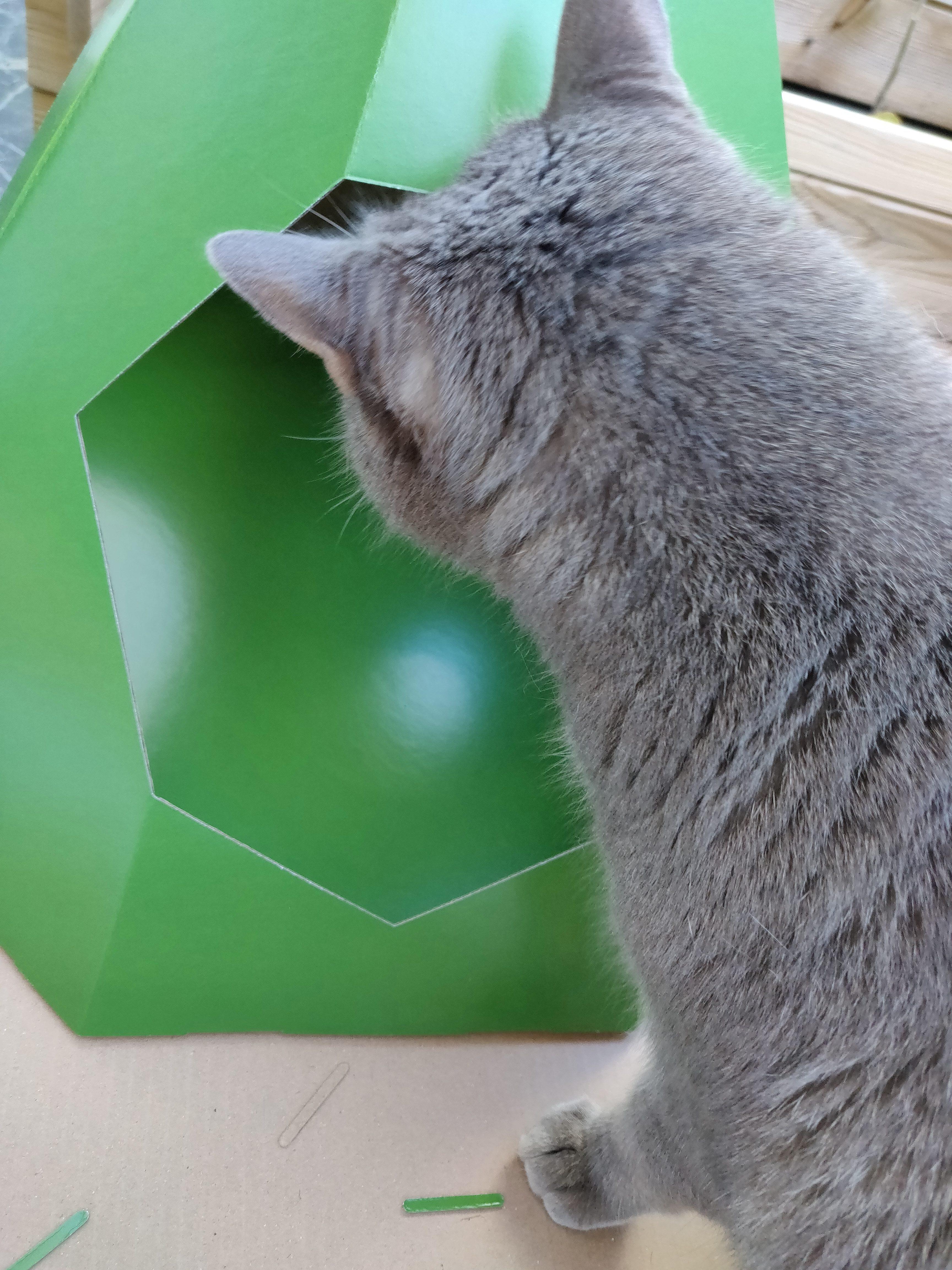 Tipi en carton pour chat - La Box Naturelle 3