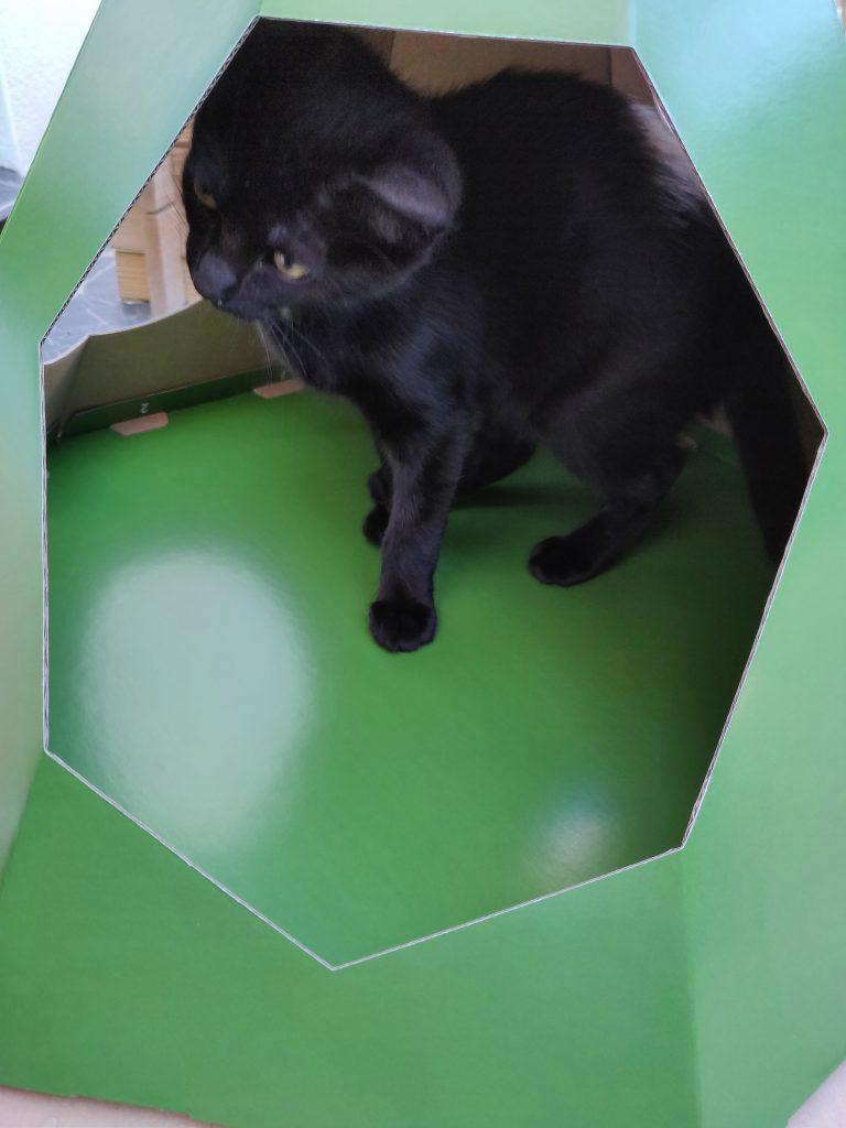 Tipi en carton pour chat - La Box Naturelle 5
