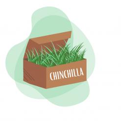 Box pour chinchilla