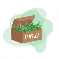 Box pour gerbille