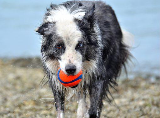 Ultra ball - Chuckit 2