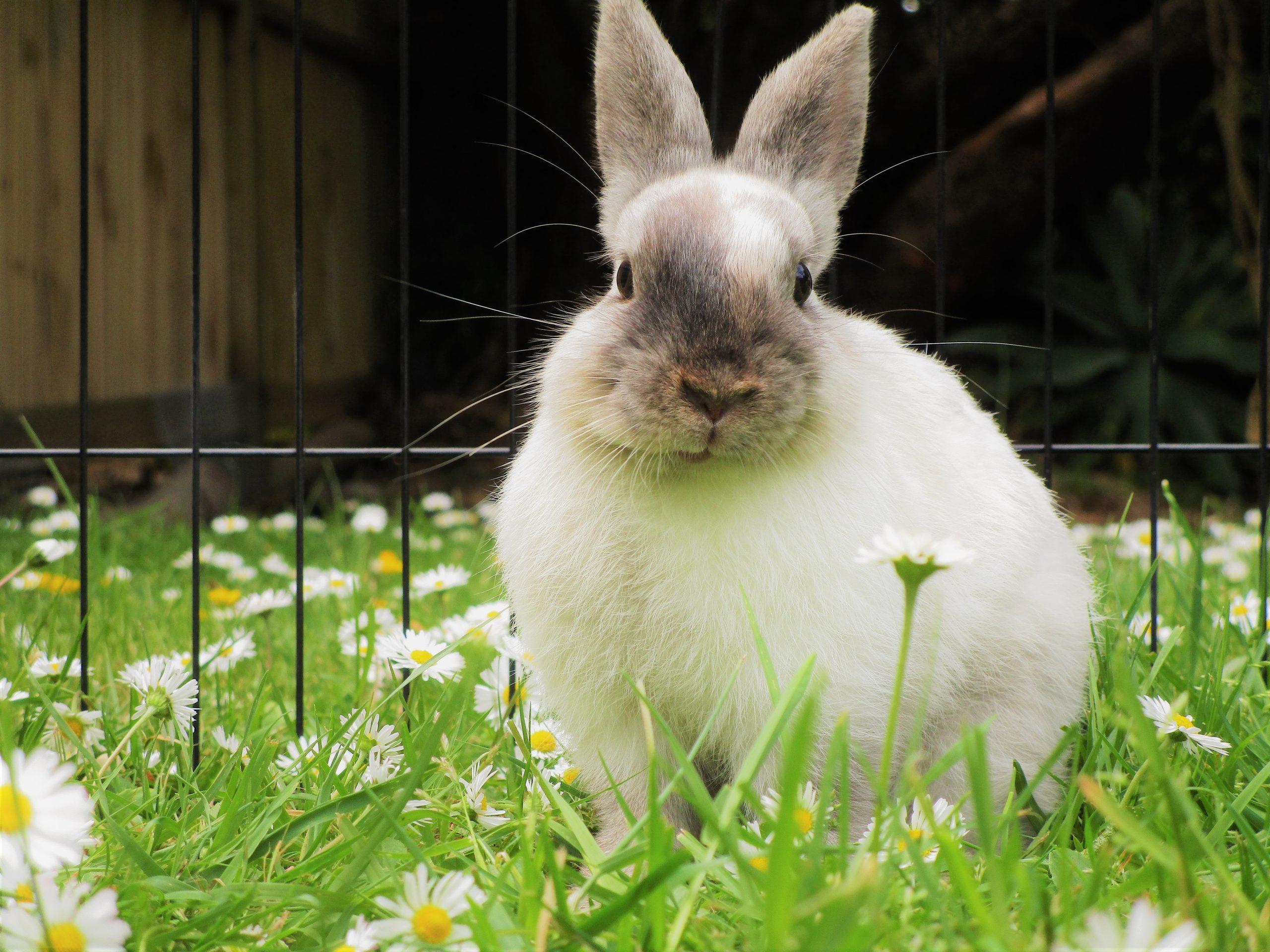 L'alimentation du lapin