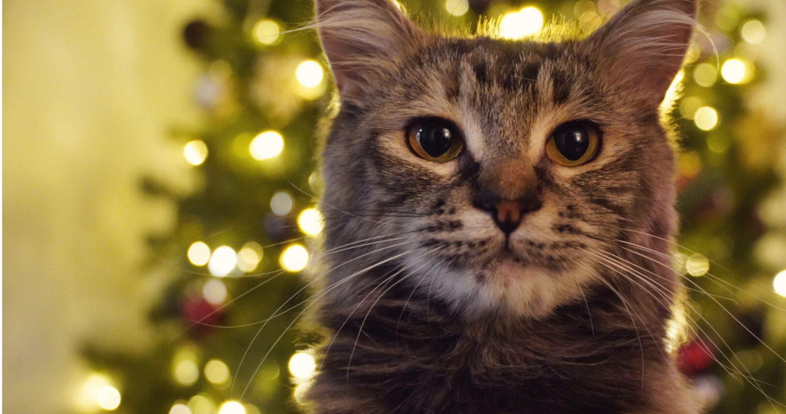 Box de Noël pour chat - La Box Naturelle