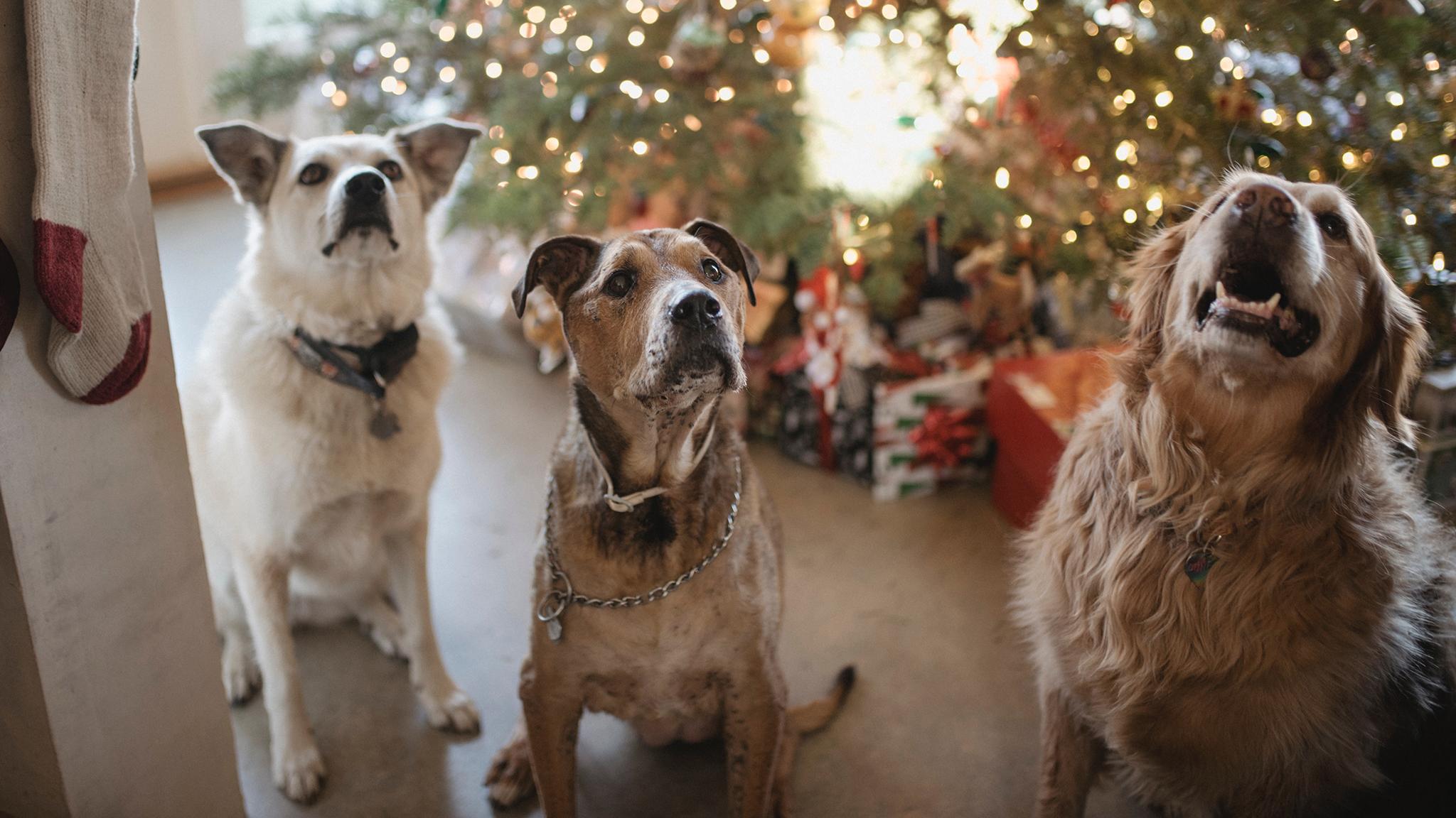 Top 10 des cadeaux de Noël sains pour chien