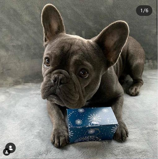 Calendrier de l'avent pour chien