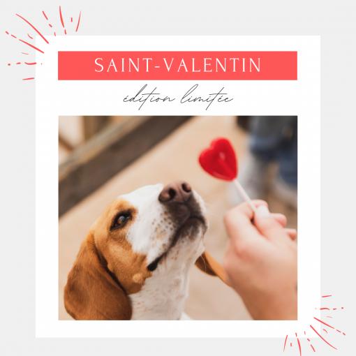Box Saint Valentin pour chien
