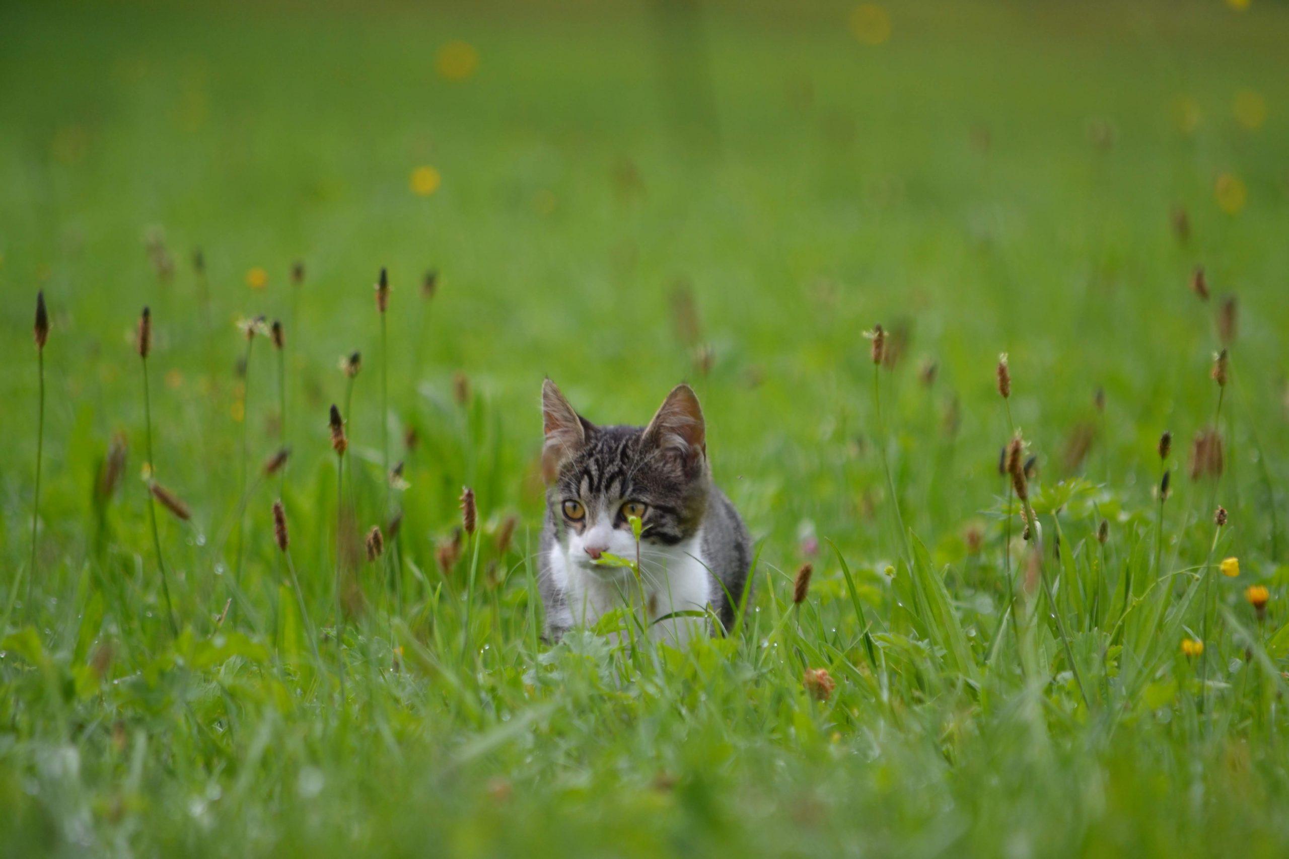 impact environnemental de nos animaux de compagnie