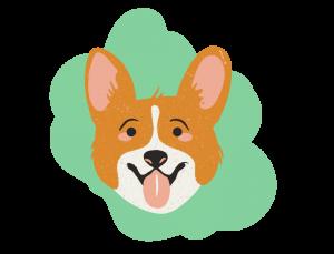 Friandises et jouets pour chien - La Box Naturelle