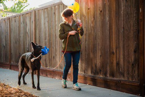 Jouet ballon anniversaire chien 2