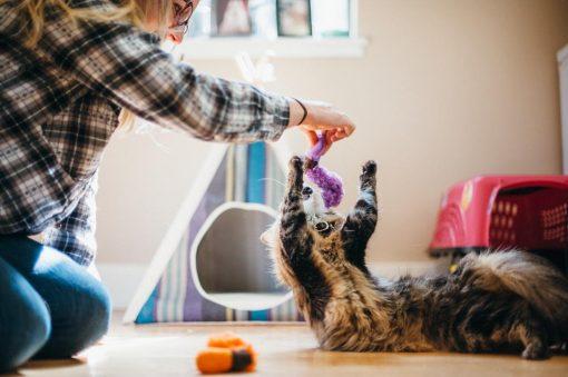 Asticots en fourrure pour chat - Pet Play 3