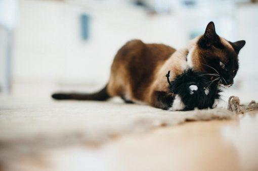 Boule de suie pour chat - Pet Play 3