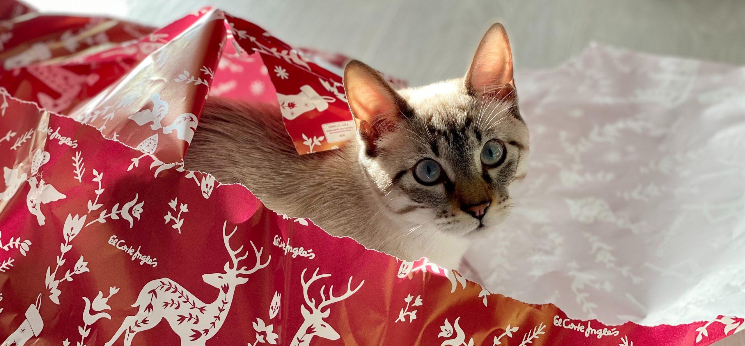 Cadeau de Noël pour chat - La Box Naturelle